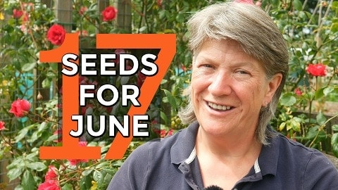 Seeds to sow in June
