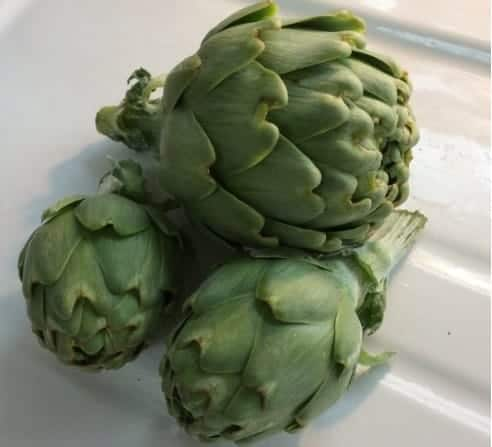 Globe artichokes are perennial vegetables.