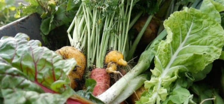 selection of vegetables including carrots, leeks and leafy greens