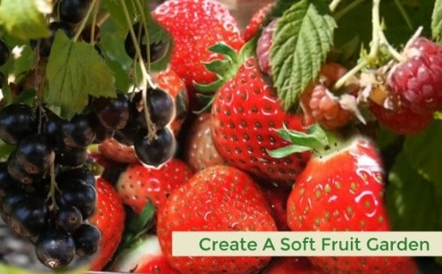 Soft fruit including strawberries, raspberry and blackcurrants.