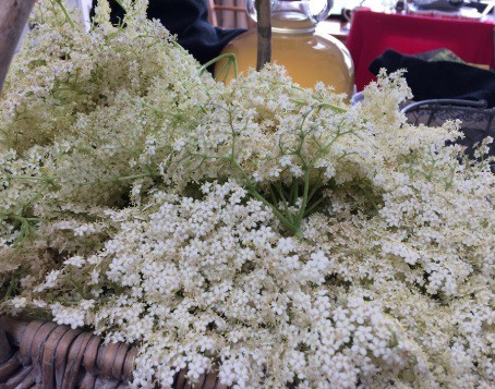 Elderflower blossoms in a basket.