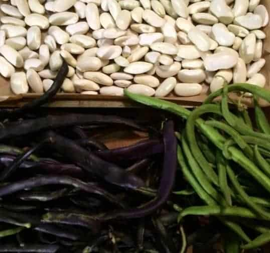 purple beans and green French beans and seeds