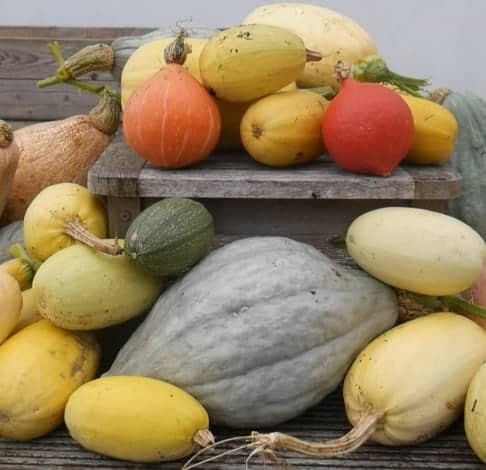 Pumpkin and winter squashes on a table and the floor.