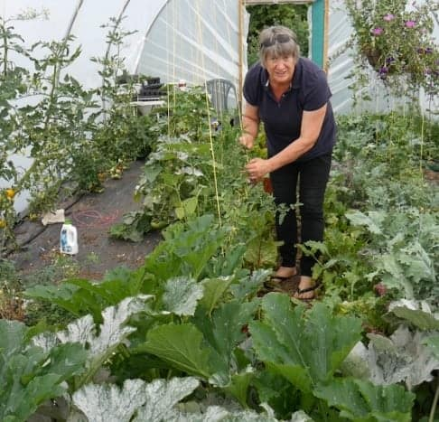 Woman tending to salads growing in polytunnel.