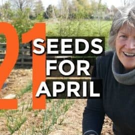 seeds to sow in April