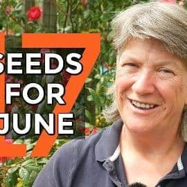What to Sow in June | Month by month sowing guide