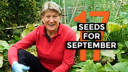 what to sow in September