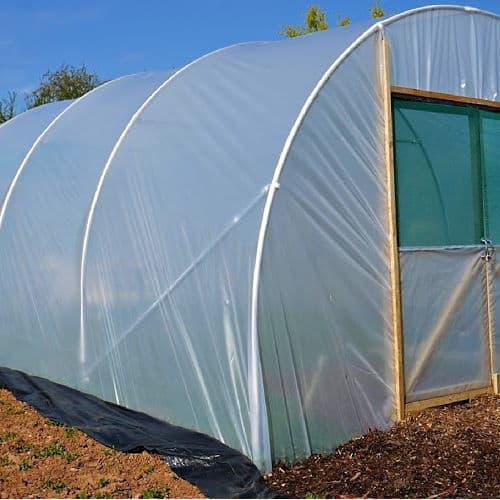 Polytunnel from Plants Direct