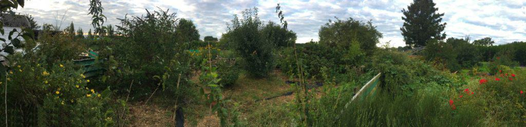 View of garden filled with edible plants.