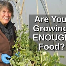 how much to grow for self sufficiency
