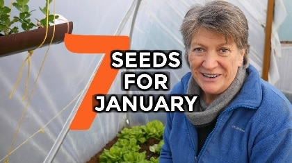 veg seeds for january