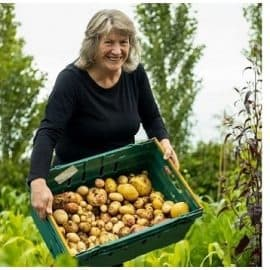Harvested potatoes from a no dig, no till garden