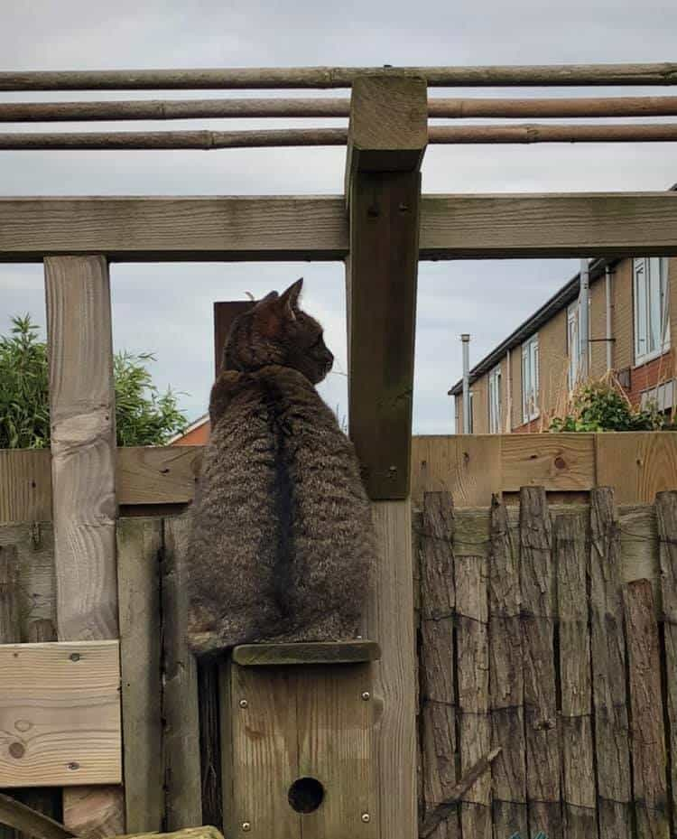 deter cats with fencing