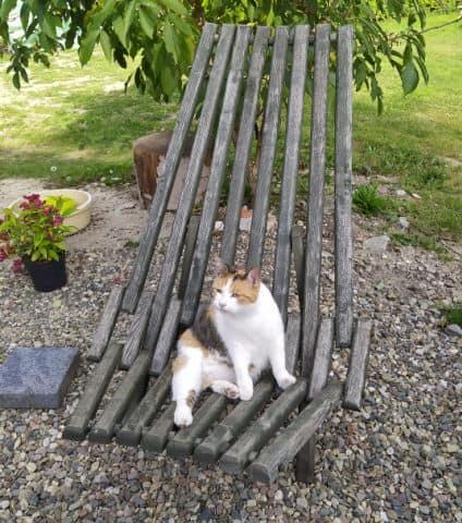Cat sitting on garden bench