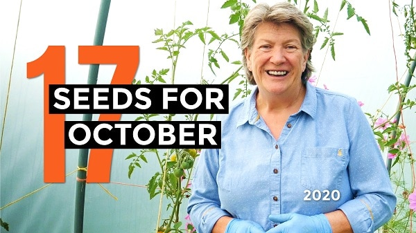 What seeds to sow in October