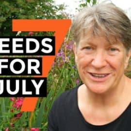 Seeds to sow in July | Vegetable gardening